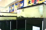 むつ湾のお魚鑑賞コーナー